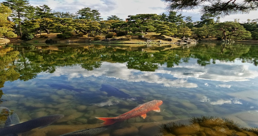 étang japonais