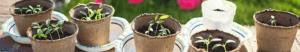pots plantation